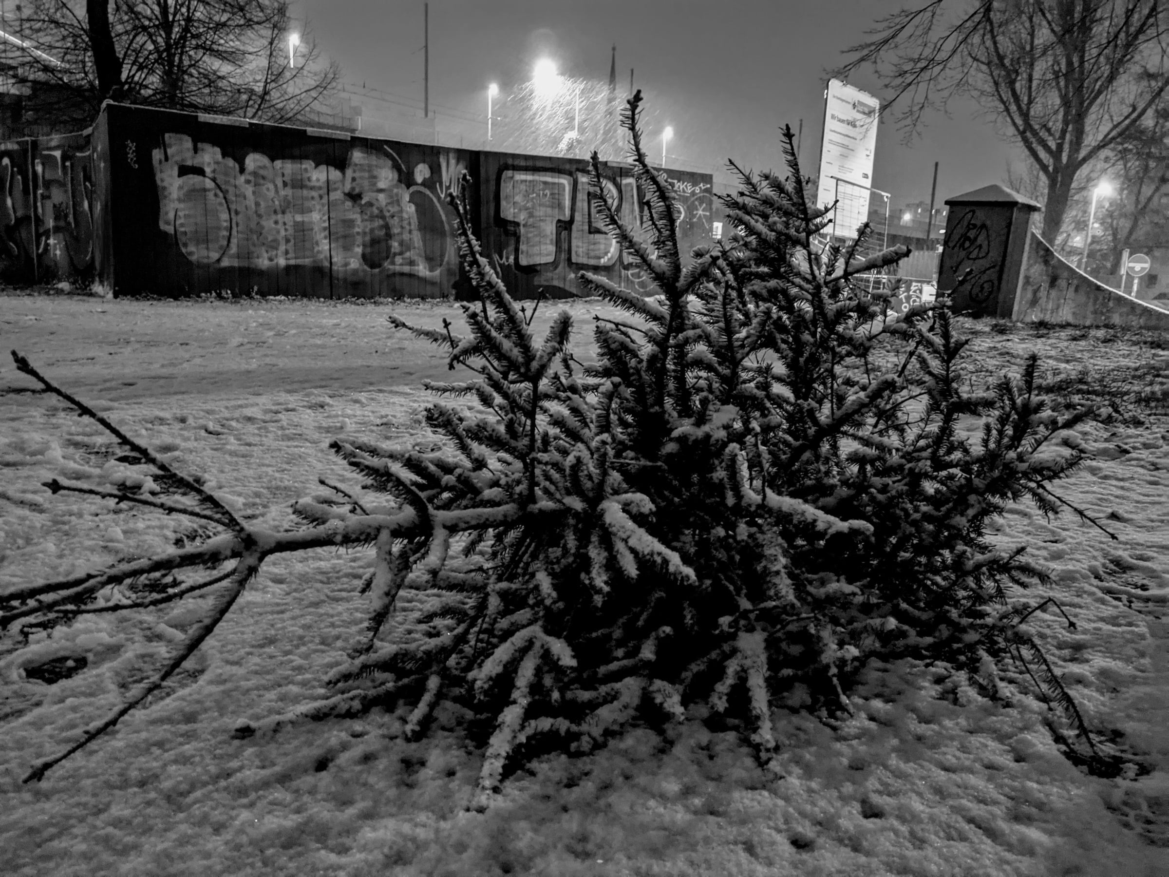 A black-and-white photo of a cut-down christmas tree laying on the ground covered in snow.